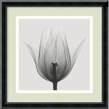 'Triumph Tulip' by Steven N. Meyers Framed Photographic Print