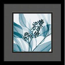 'Eucalyptus I' by Steven N. Meyers Framed Photographic Print