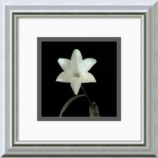 'Flower Series VI' by Walter Gritsik Framed Photographic Print