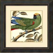 'Tropical Parrot I' by Martinet Framed Art Print