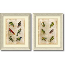 'Antiquarian Parrots' by Vision Studio 2 Piece Framed Art Print Set