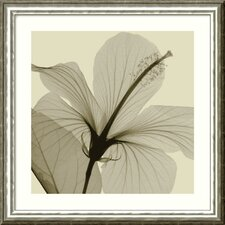 "<strong>Amanti Art</strong> Hibiscus by Steven N. Meyers, Framed Print Art - 24.68"" x 24.68"""