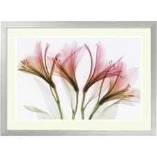 "<strong>Amanti Art</strong> Alstromeria by Steven N. Meyers, Framed Print Art - 22.12"" x 30.12"""