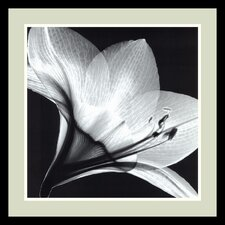 "Amaryllis 1 by Steven N. Meyers, Framed Print Art - 20.91"" x 20.91"""