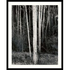 "Aspens by Ansel Adams, Framed Print Art - 31.04"" x 25.04"""