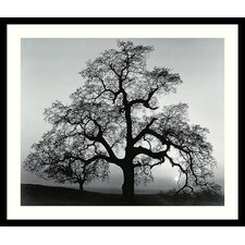 "Oak Tree, Sunset City, California, 1962 by Ansel Adams, Framed Print Art - 23.04"" x 27.04"""