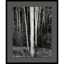 "<strong>Amanti Art</strong> Aspens by Ansel Adams, Framed Print Art - 33.04"" x 27.04"""