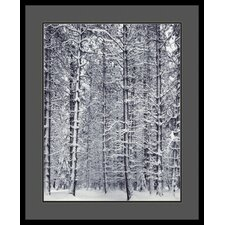 "Pine Forest in the Snow, Yosemite National Park by Ansel Adams, Framed Print Art - 33.04"" x 27.04"""