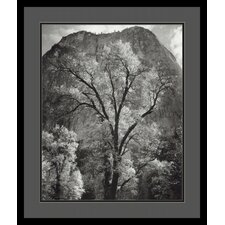 'Autumn Tree Against Cathedral Rocks' by Ansel Adams Framed Photographic Print