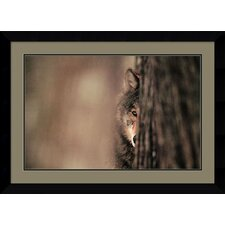 "<strong>Amanti Art</strong> Gray Wolf by Jim Brandenburg, Framed Print Art - 24.87"" x 34.37"""