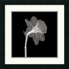 "<strong>Amanti Art</strong> Veiled Blossom Framed Art Print Framed Decorative Art Print - 18"" x 18"""