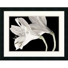 <strong>Amanti Art</strong> Lily II Framed Art Print by Dianne Poinski