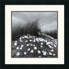 "<strong>Amanti Art</strong> Sand Daisies by Chip Forelli Framed Fine Art Print  - 18"" x 18"""