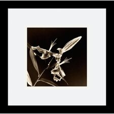 "<strong>Amanti Art</strong> Flower Series V by Walter Gritsik Framed Fine Art Print - 11.04"" x 11.04"""