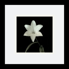 "<strong>Amanti Art</strong> Lily, Flower Series VI by Walter Gritsik Framed Fine Art Print - 11.04"" x 11.04"""