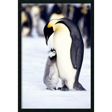 <strong>Amanti Art</strong> Penguin - Maternal Moment Framed Print