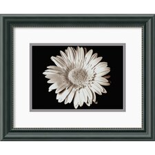 'Gerbera' by Sara Liu Framed Photographic Print