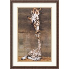 Makulu Giraffe First Kiss Framed Print by Ron D'Raine