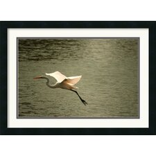 <strong>Amanti Art</strong> Crane Framed Print by Andy Magee