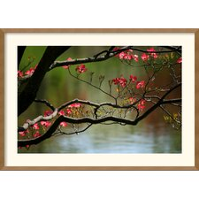 <strong>Amanti Art</strong> Dogwood in Bloom Framed Print by Andy Magee