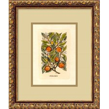 <strong>Amanti Art</strong> Orange (Malus Arantia) Framed Italian Engraving Print