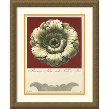 <strong>Amanti Art</strong> Rosone Antico III Framed Art Print by Guerra