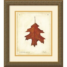 <strong>Amanti Art</strong> Oak Leaf Framed Print by Meg Page