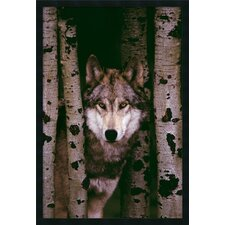Gray Wolf Framed Photographic Prints