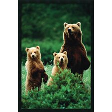 Three Bears Framed Photographic Prints