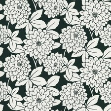 Ink Zinnia Flower Wallpaper