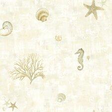 Sand Dollar Boca Raton Seashells Wallpaper