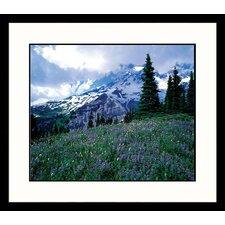National Treasures 'Mt. Ranier Spring' by Adam Jones Framed Photographic Print