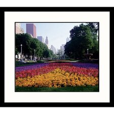 Cityscapes Chicago Spring Framed Photographic Print