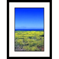 Field of Yellow Flowers Framed Photograph - Mark Segal