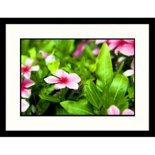 Florals Impatiens Framed Photographic Print