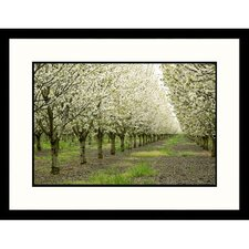 Florals Cherry Orchard Framed Photographic Print