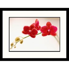 Florals Red Orchids Framed Photographic Print