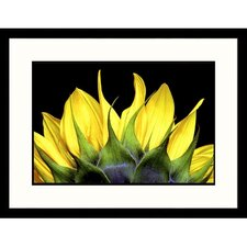 Florals Top of Sunflower Framed Photographic Print