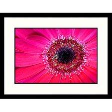 Florals Gerbera Daisy Framed Photographic Print