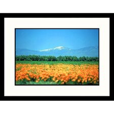<strong>Great American Picture</strong> California Valley Poppies Framed Photograph