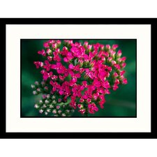 Florals Foxglove Framed Photographic Print