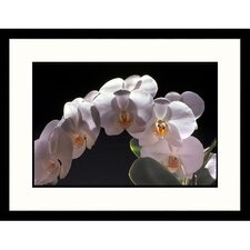 <strong>Great American Picture</strong> Phalaenopsis Orchid Framed Photograph