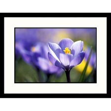 <strong>Great American Picture</strong> Purple Crocus Framed Photograph