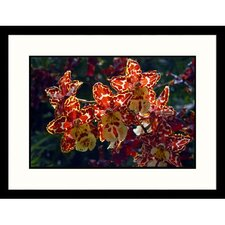 <strong>Great American Picture</strong> Red and yellow Orchids Framed Photograph