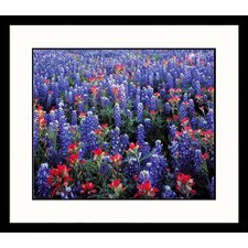 Bluebonnets Country Framed Photograph - Adam Jones