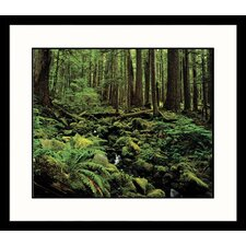 <strong>Great American Picture</strong> Sol Duc Rain Forest Framed Photograph - Adam Jones