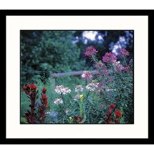 Landscapes Georgia Farm Framed Photographic Print