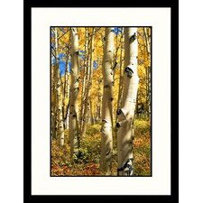 Landscapes 'Aspen Trees, Colorado' by Allen Russell Framed Photographic Print