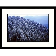 <strong>Great American Picture</strong> Iced Spruce Forest, Great Smokey Mountains, Tennessee Framed Photograph - Jack Jr Hoehn