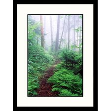 <strong>Great American Picture</strong> Appalachian Trail, Great Smokey Mountains, Tennessee Framed Photograph - David Davis